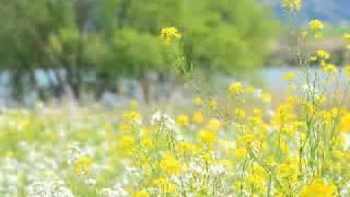 花*花 - 風の花