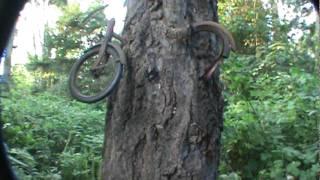 bike in tree vashon Island
