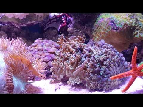 aquarium marine
