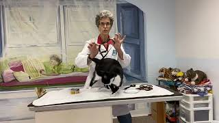 Cat harness  how to put one on your cat the low stress way   facebook live 852020