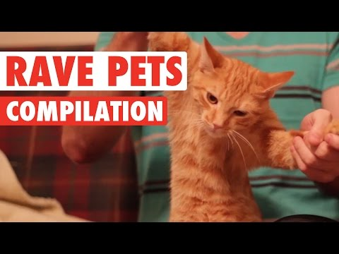 Rave Pets || Funny Pet Compilation