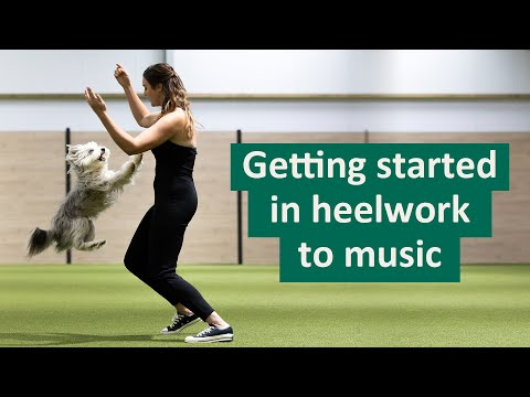 How to get started in Heelwork To Music | Ashleigh Butler's Top Tips
