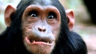 Jane Goodall Tribute