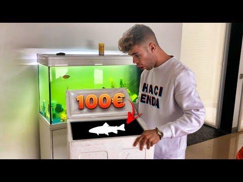 ESTE es mi NUEVO PEZ de +100$ *comprando nuevos peces* [Salva]