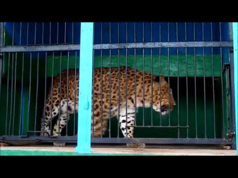 Передвижной зоопарк Ноев Ковчег  Рязань возле ТЦ Европа