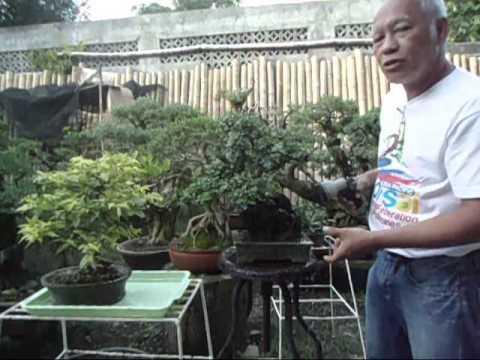 Bonsai Tutorials for Beginners: Understanding Water and Sunlight for your Bonsai