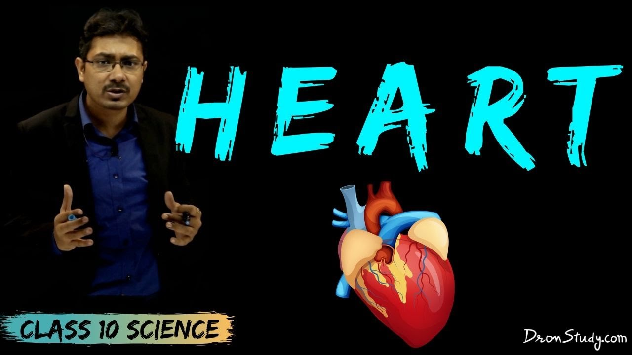 Heart | Life Processes 2 | CBSE Class 10 | Science - YouTube