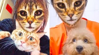 Dogs & Cats Hilarious and Scared Reaction When They See Cat Filter On Owners' Faces
