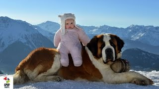 Top 5 Biggest Dog Breeds In The World !
