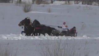 Русская тройка Шушенское 2016 (Horse–Animal-racing-конь-смотреть-онлайн-скачки)