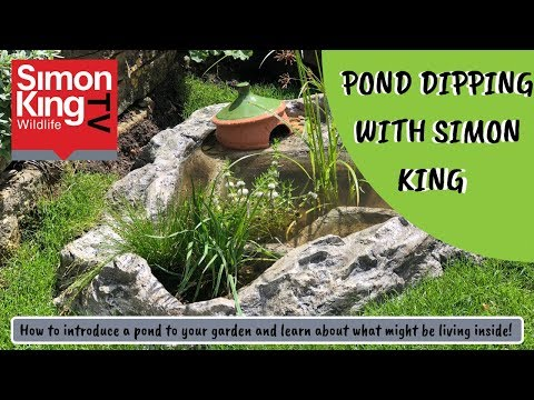 Let's Go Pond Dipping!
