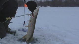 Зимняя рыбалка щука плотва густера Рыбалка удалась