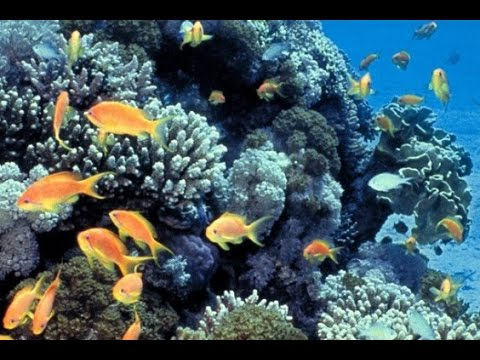 Habitat Degradation on Coral Reefs