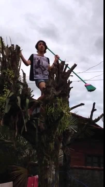 gay cantando en un arbol