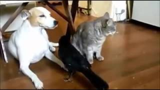 Free Download Funny Animal Video