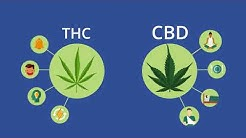 Introduction of Cannabis : What are CBD & THC? How can you use it to treat medical conditions?