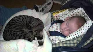 Колыбельная кошки