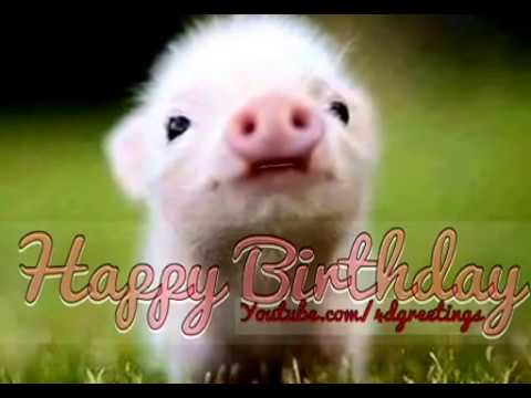 Happy Birthday Quotes Young Lady ~ Cute little pig singing happy birthday song youtube