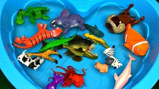 Learn Zoo Wild Animals Names Educational Toys Video For Children YouTube Videos