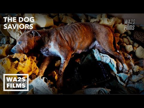 Stray Dog Daddy Rescues & Washes Dogs With Hope For Paws Like The DoDo
