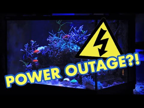 Fish Tanks During A Power Outage