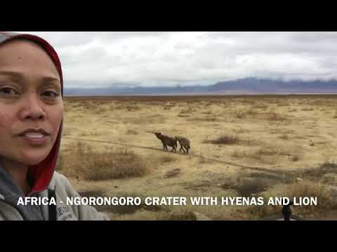 AFRICA - HYENAS and LIONS IN NGORONGORO CRATER