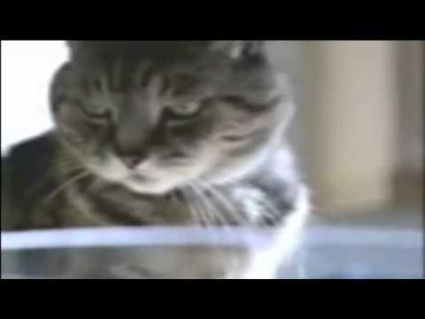 Iklan Lucu Kucing vs Ikan Mas Koki