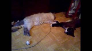 4 кота лежат в ряд около холодильника