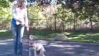 Wheaten Terriers: How To Teach Your Dog: Obedience Training Tips & Tricks : Teach Your Wheaten Terrier To Heel Using These Dog Obedience Training Methods