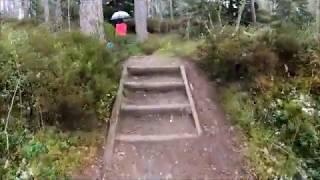 Strathmashie Forest