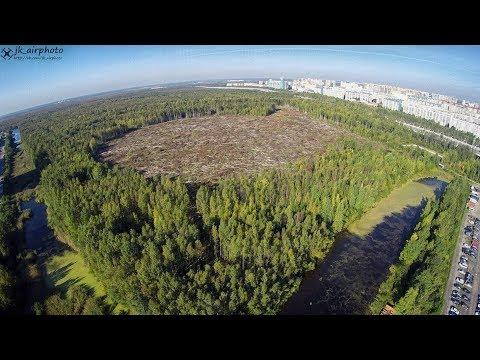 Уничтожение Юнтоловского лесопарка в Санкт-Петербурге | Приморский район