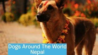 Dogs Around The World: Nepal