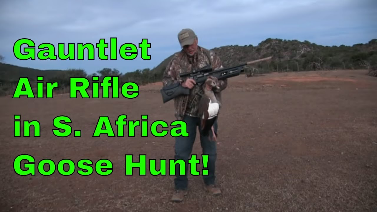 Airgun Hunting: New Umarex Gauntlet on Pest birds