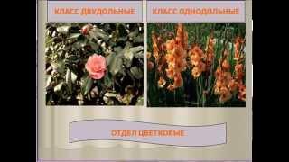 Бинарная номенклатура и классификация организмов