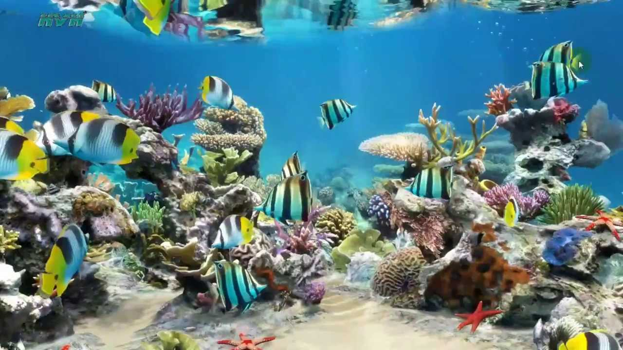 Sim aquarium live wallpaper my desktop youtube for Aquarium fish online