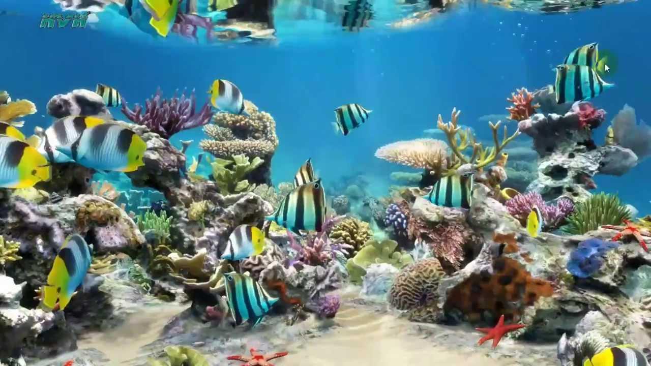 Sim Aquarium Live Wallpaper - My Desktop - YouTube