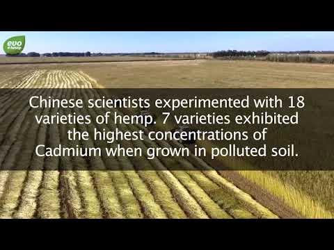 Hemp Helps Soil