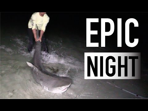 TWO Tiger Sharks caught from the Beach!
