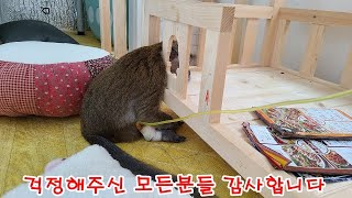 아픈 원숭이 삼순이의 회복기!!