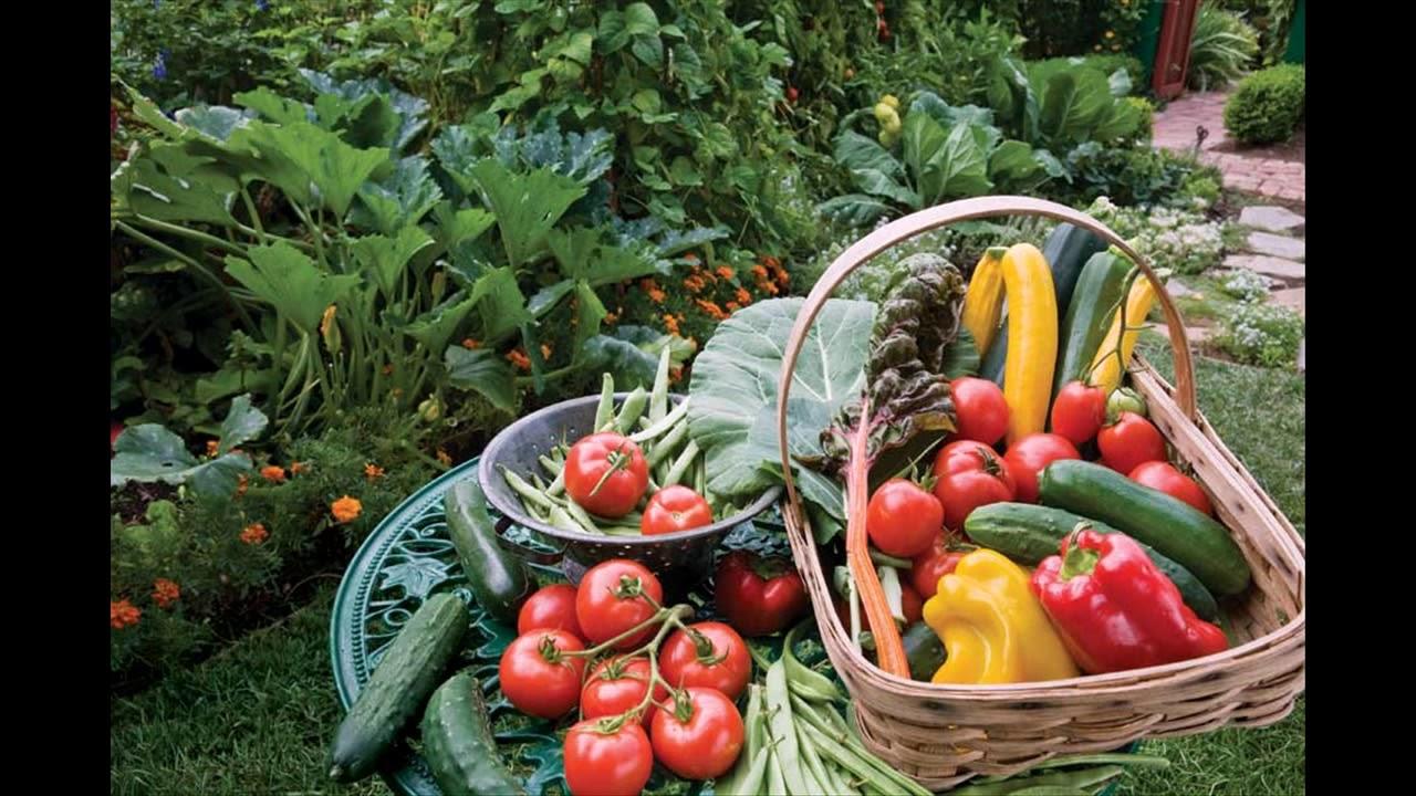 Simple Steps Vegetable Garden edging ideas - YouTube