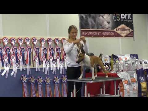 Leiden Miniature Bull Terrier Championship show MBTV 2016