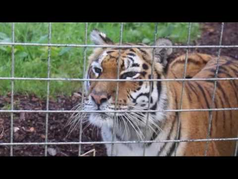 A trip to the isle of wight zoo