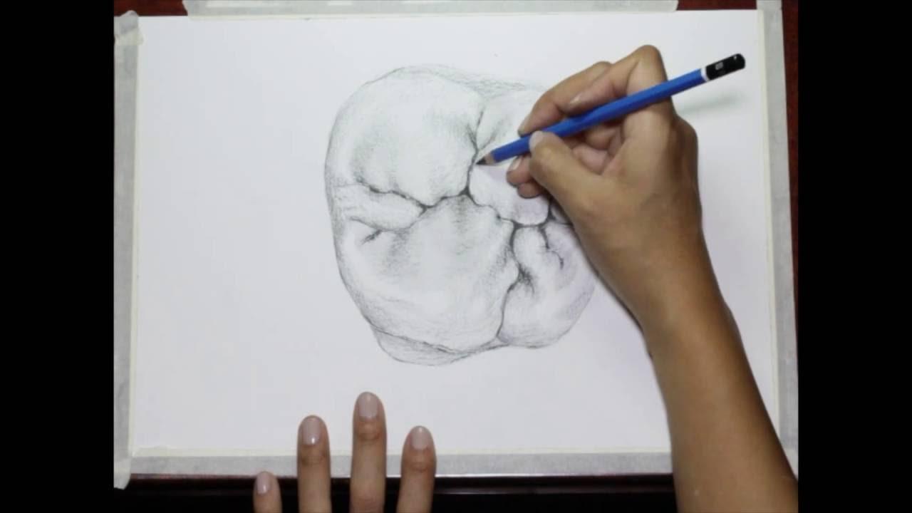 Drawing a first upper molar... by Vassnia Nizama - YouTube