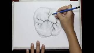 Drawing a first upper molar... by Vassnia Nizama