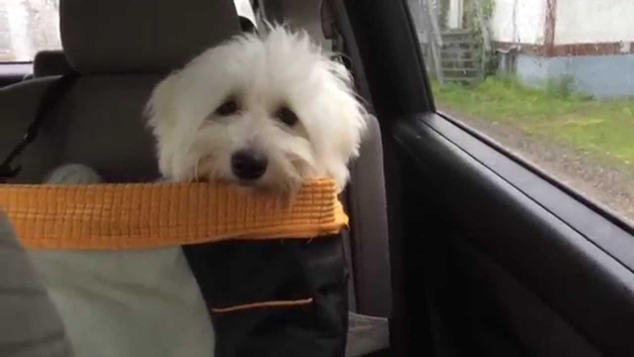 Dog Car Seat The Kurgo Skybox Review
