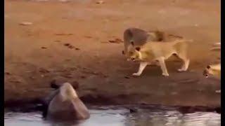 LO MEJOR DE ATAQUES DE ANIMALES  EN VIVO