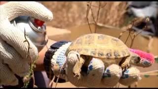7000 контрабандных черепах выпустили на природу