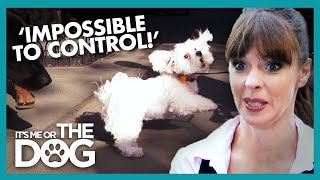 Cute Dogs Turn AGGRESSIVE On Walks | It's Me or The Dog