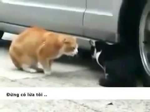 Vợ chồng mèo chửi nhau   Video clip hài hước