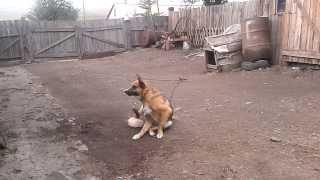 Это моя собака
